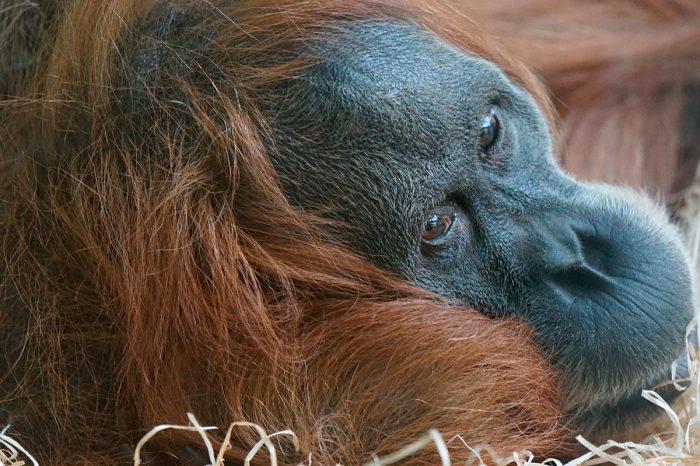 Sumatra Entera y Playas de Cubadak