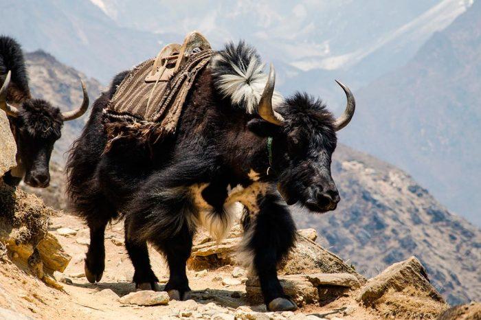 Nepal – Descubriendo Nepal