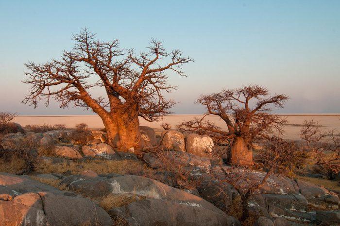 Madagascar – La Gran Ruta Baobab 4×4