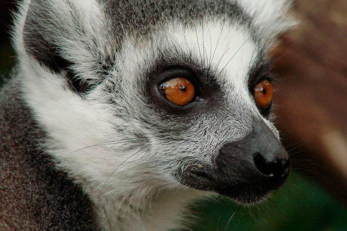 Madagascar – Trekking Malgache