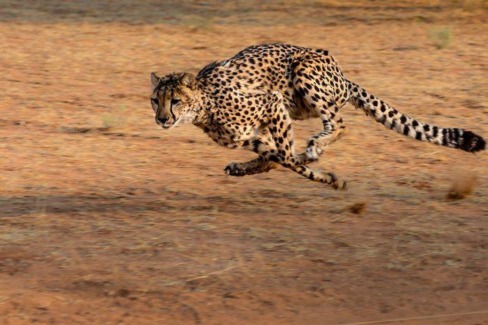 Namíbia, Botsuana, Zimbabue – La Ruta Okavango en Camión