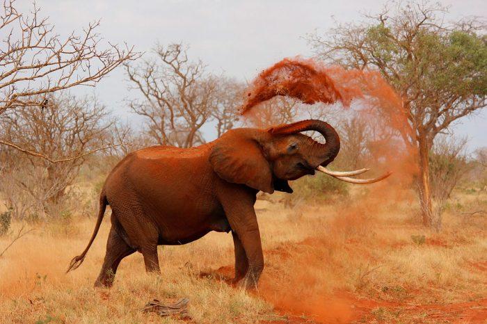 Kenia, Tanzania y Zanzibar – Safari Total en Camión