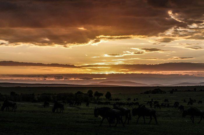 Kenia, Tanzania y Zanzíbar – Reservas y Playa