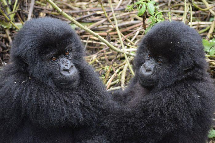 Uganda – La Ruta de los Gorilas