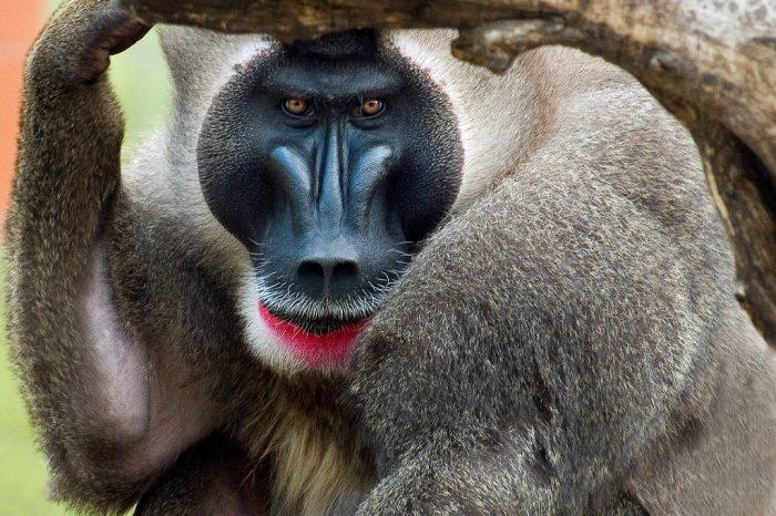 Camerún – Selva y Sahel